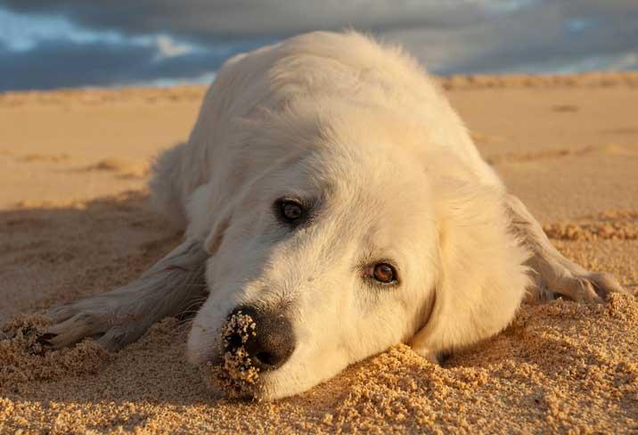 Cute white dog on the beach