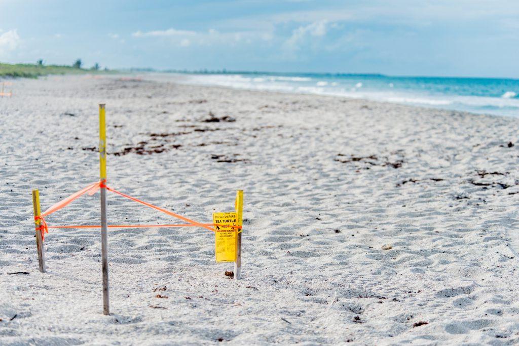 What You Need to Know about Sea Turtle Nesting Season on Hilton Head Island