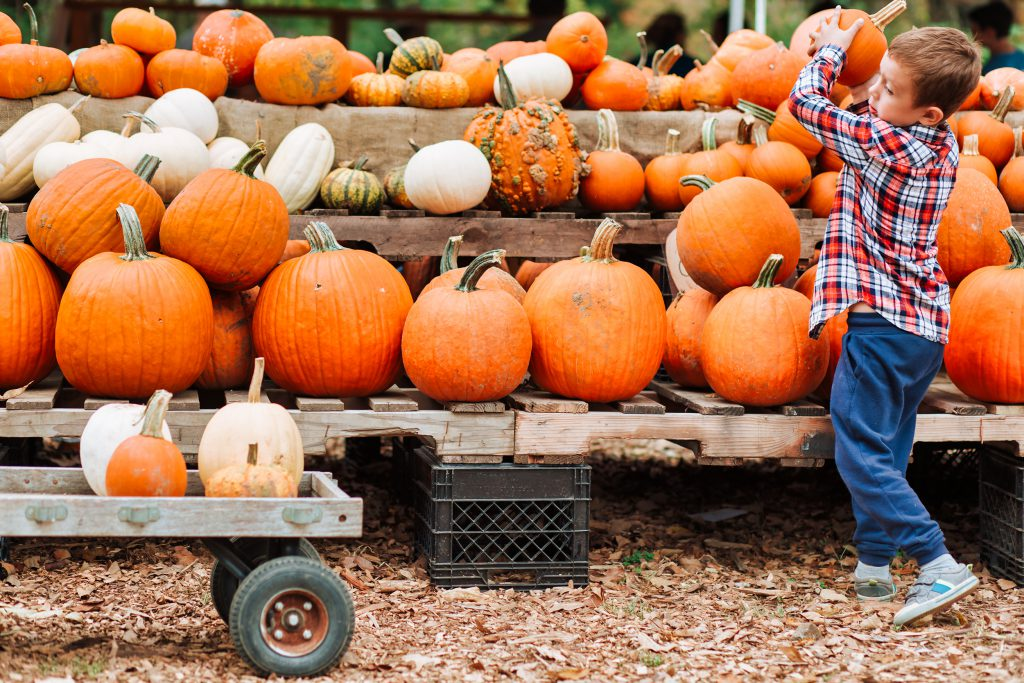 boy picks pumpkin at the farmers market. The person in motion, defocused. Copy space